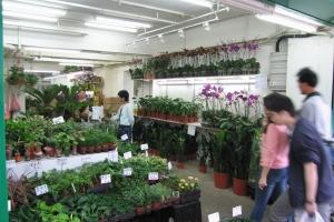 Hong Kong 2006_0058