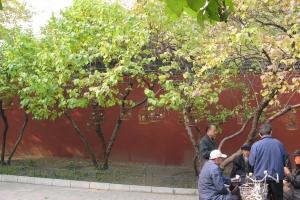 Beijing2007_0253