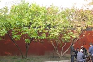 Beijing2007_0254