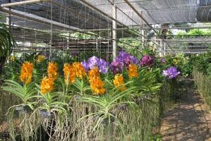 Thailand2008_0057
