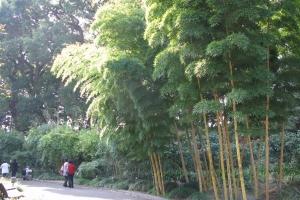 Japan2009_0017