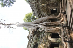 2011 Cambodia_0600