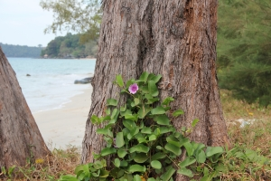 2011 Cambodia_0660