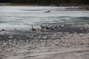 2011 Canada_0461