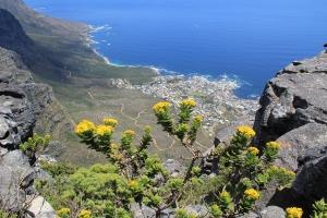 2012 Cape Town _0122