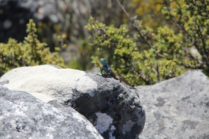 2012 Cape Town _0141