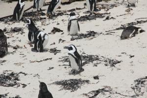 2012 Cape Town _0184