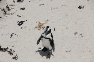 2012 Cape Town _0187