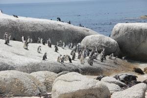 2012 Cape Town _0188