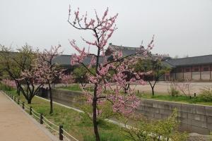 2013 SydKorea_0102