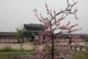 2013 SydKorea_0103