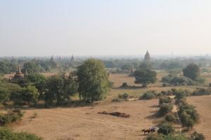 2016 Myanmar_0177
