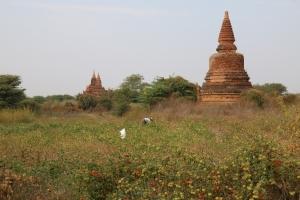 2016 Myanmar_0354