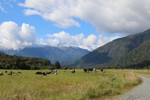 2017 New Zealand_0082