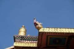 2019-Kathmandu_0211