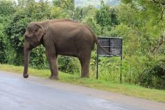 Sri-Lanka-2020_0057