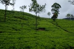 Sri-Lanka-2020_0218