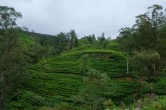 Sri-Lanka-2020_0220