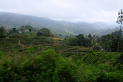 Sri-Lanka-2020_0245