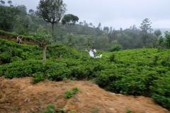 Sri-Lanka-2020_0250