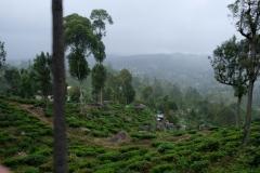 Sri-Lanka-2020_0256