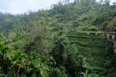 Sri-Lanka-2020_0271