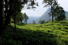 Sri-Lanka-2020_0278
