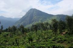 Sri-Lanka-2020_0280