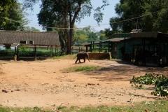 Sri-Lanka-2020_0331