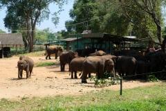Sri-Lanka-2020_0339