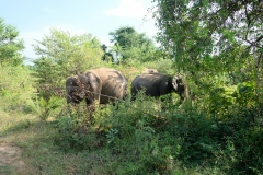 Sri-Lanka-2020_0351