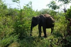 Sri-Lanka-2020_0353