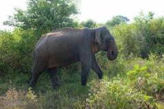 Sri-Lanka-2020_0358