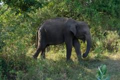 Sri-Lanka-2020_0363