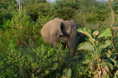 Sri-Lanka-2020_0377
