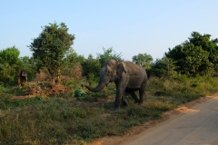 Sri-Lanka-2020_0379