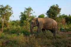 Sri-Lanka-2020_0380