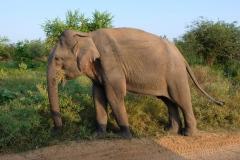 Sri-Lanka-2020_0382